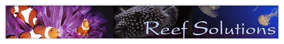 Reef Solutions header image